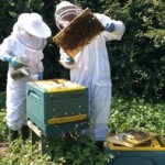 In the apiary 2