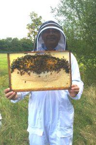 Wellesley Bees 2