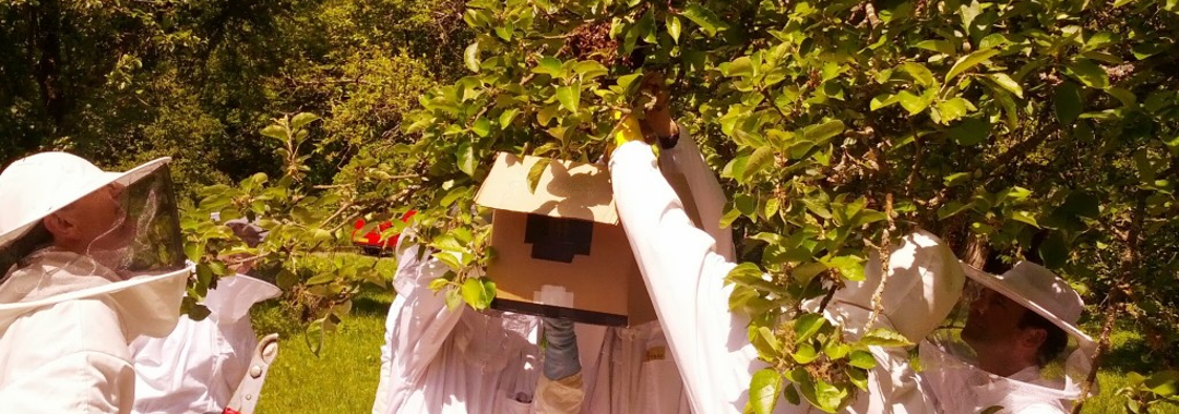 Capturing a swarm of bees