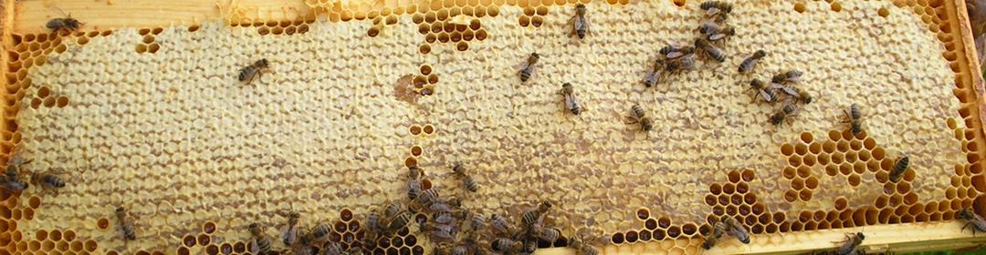 A super full of honey